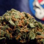 THRIVE Cannabis Marketplace Head Cheese