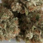THRIVE Cannabis Marketplace Kosher Kush2