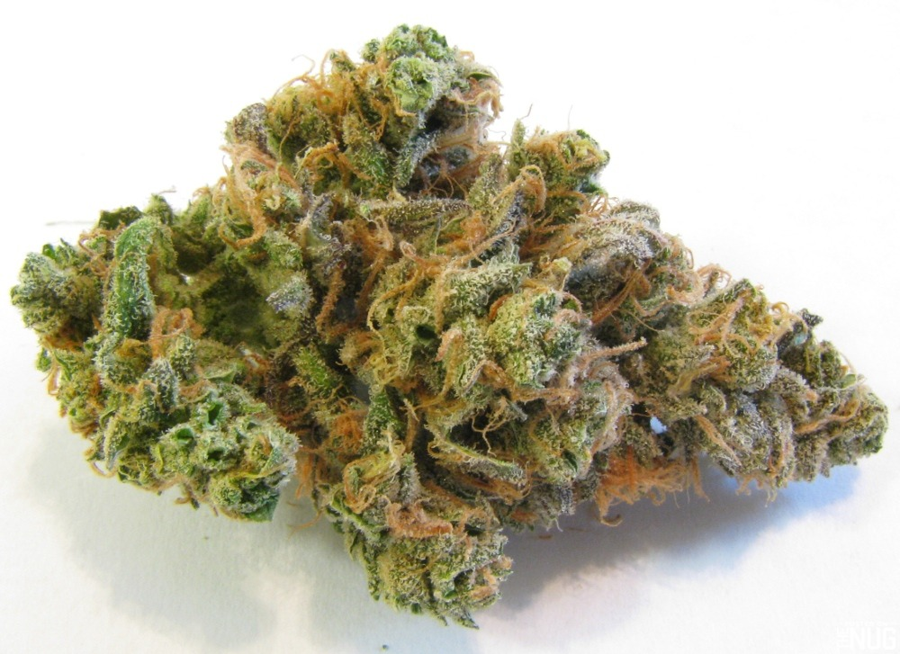 Strain Spotlight: Blue Dream