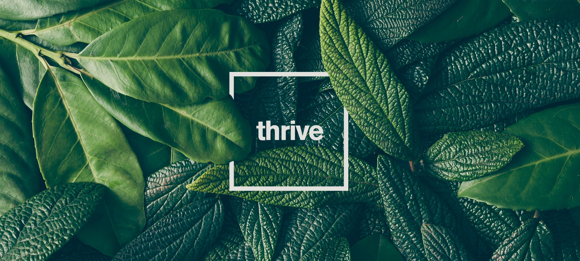 Thrive Logo in front of greenery background