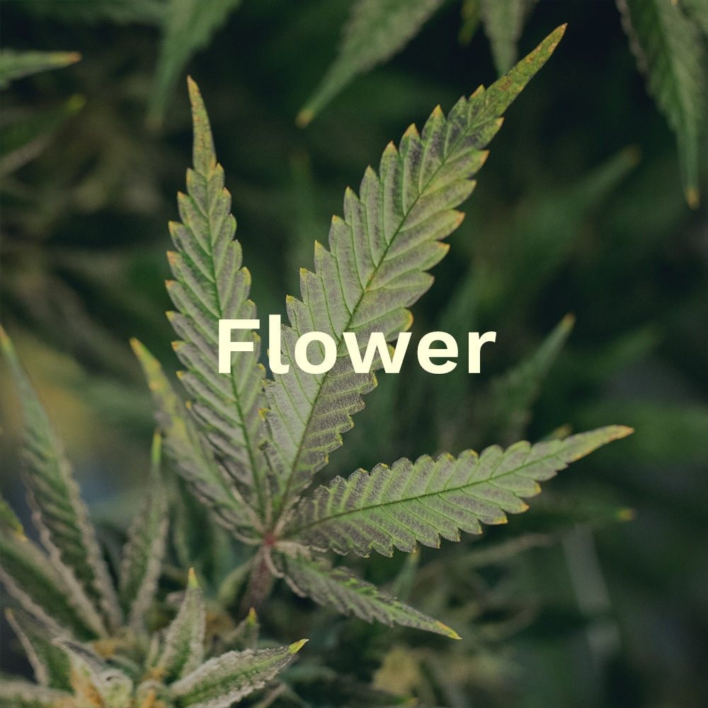 Text on a background image of Cannabis leaves