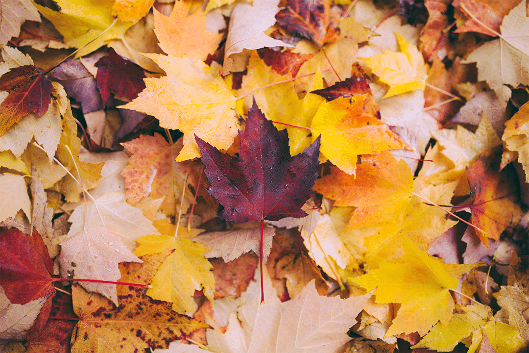 Tackle Pesky Fall Allergies with Cannabis